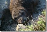 Seeelefantenbaby